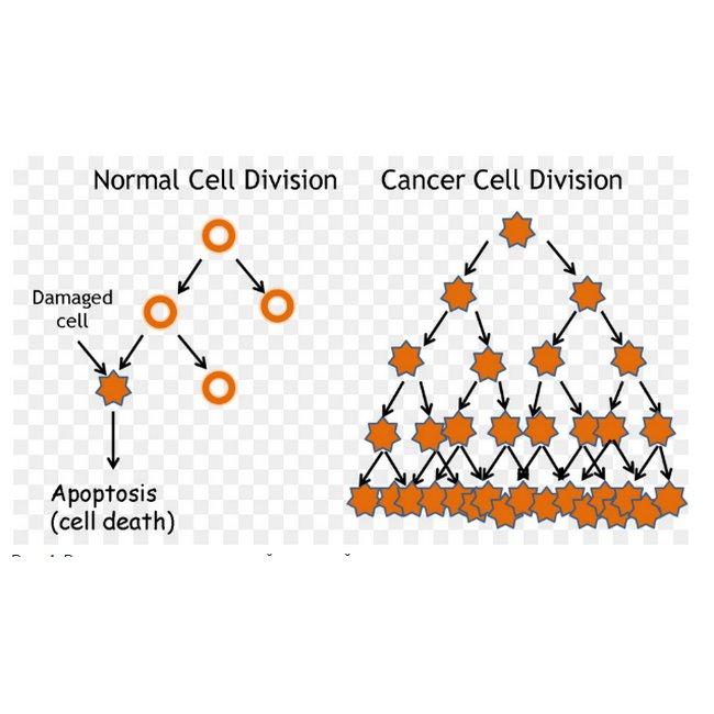 4 - Нетрадиционное лечение рака. Истории исцеления